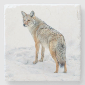 Coyote on alert in snow stone coaster