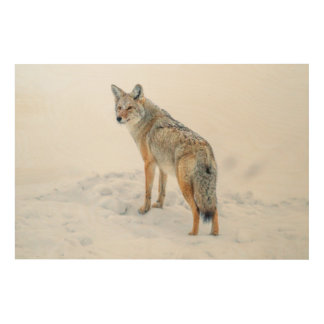 Coyote on alert in snow wood wall decor