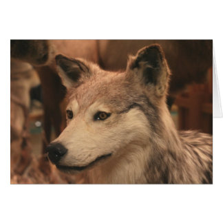 Coyote Photography Greeting Card