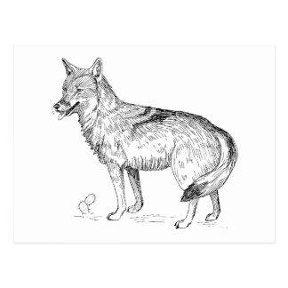 Coyote Postcard