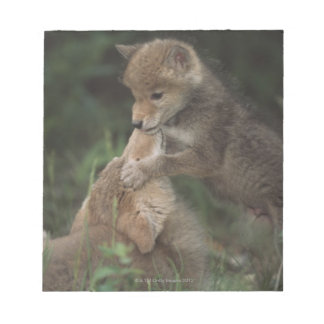 Coyote Puppies Wrestling (Canis Latrans) Notepad
