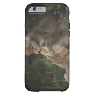 Coyote Puppies Wrestling (Canis Latrans) Tough iPhone 6 Case