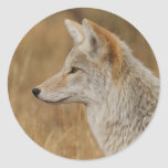 coyote round stickers