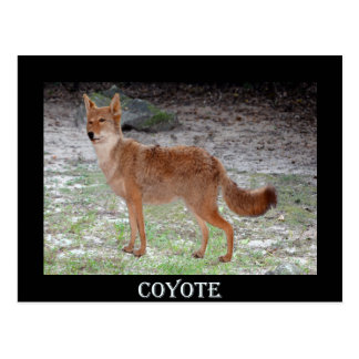 Coyote (South Dakota) Postcard