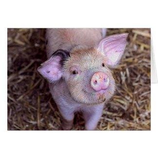 'Cozmico' the Happy Piglet Card