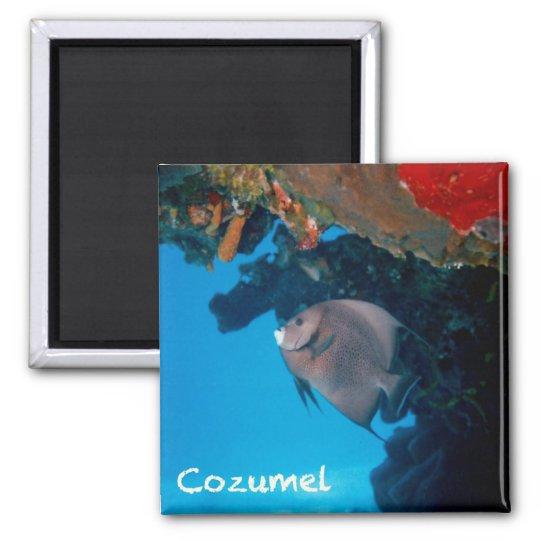 Cozumel Angelfish Magnet