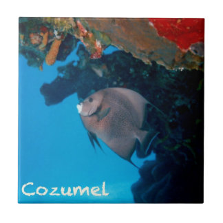 Cozumel Angelfish Tile
