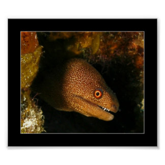 Cozumel - Moray Eel Poster