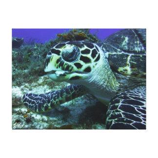 Cozumel Turtle #2 Canvas Print