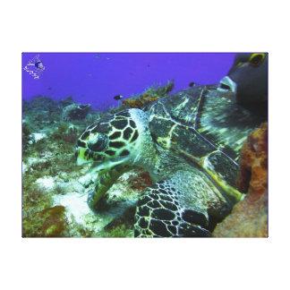 Cozumel Turtle #3 Canvas Print