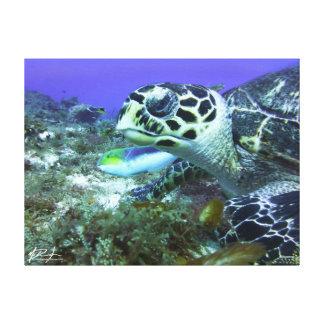 Cozumel Turtle Canvas Print