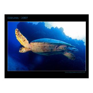 Cozumel - Turtle Postcard