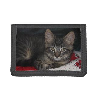 Cozy Caspian Kitten TriFold Nylon Wallet