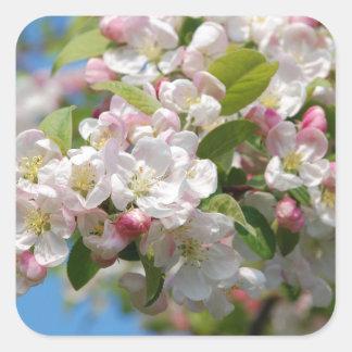 Crab apple blossom square sticker