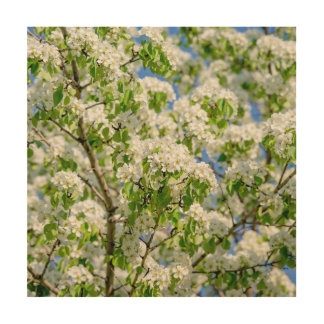 Crab apple blossom wood canvases