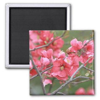 Crab Apple Blossoms Square Magnet