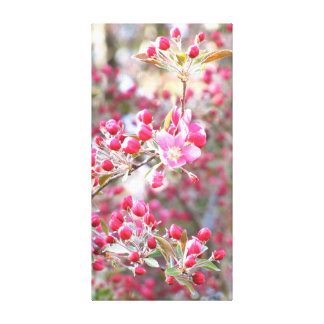 Crab Apple Flowers Canvas Prints