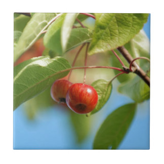 Crab apples tile