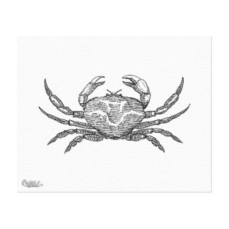 Crab Stretched Canvas Print
