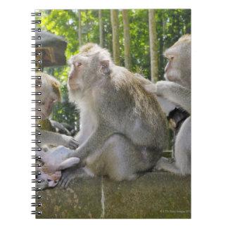 Crab-eating Macaque, Macaca fasciularis, in Ubud Notebook