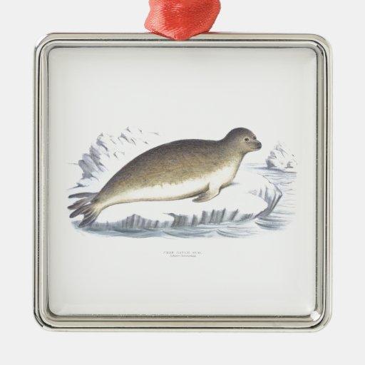 Crab Eating Seal no.1 Artic Marine Mammal Christmas Ornaments