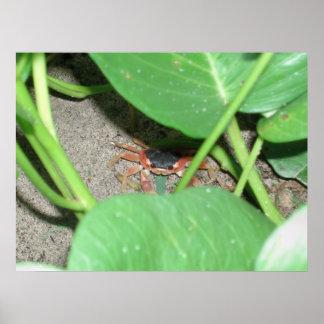 Crab hiding print
