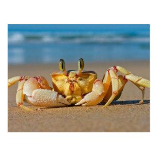 Crab on a Beach Postcard