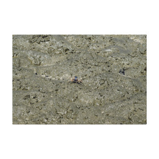 CRAB ON BEACH QUEENSLAND AUSTRALIA STRETCHED CANVAS PRINTS
