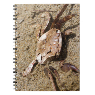 crab on the beach notebook