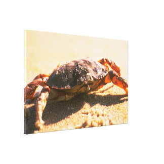 Crab on The Beach Photograph Gallery Wrapped Canvas