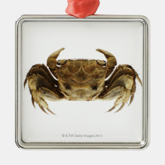 Crab on white background christmas ornament