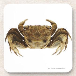 Crab on white background coaster