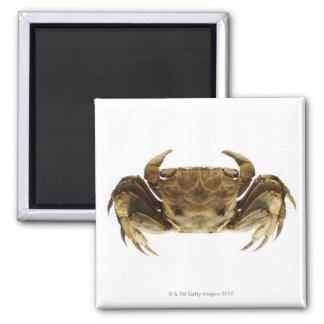 Crab on white background square magnet