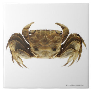 Crab on white background tile