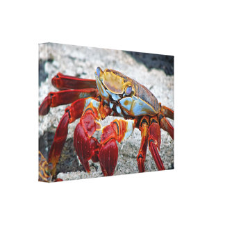 Crab photo stretched canvas print