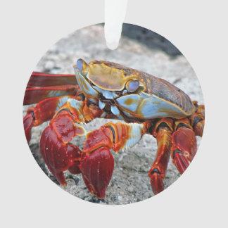 Crab photo ornament