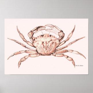 Crab Poster ~ Green Crab