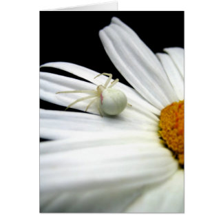 Crab Spider on Daisy Note Card