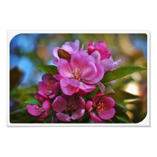 Crabapple Blossom Photo Art