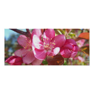 Crabapple Blossoms Print