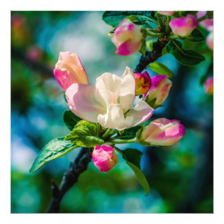 Crabapple flower and buds art photo