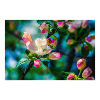 Crabapple flower and buds photo art