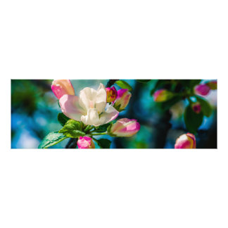Crabapple flower and buds photograph