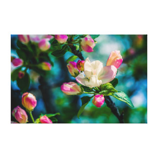 Crabapple flower and buds stretched canvas prints