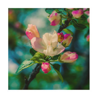 Crabapple flower and buds wood print