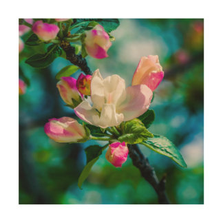 Crabapple flower and buds wood prints