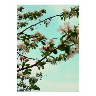 Crabapple Posters