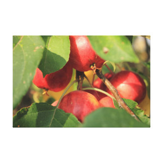Crabapples Gallery Wrapped Canvas