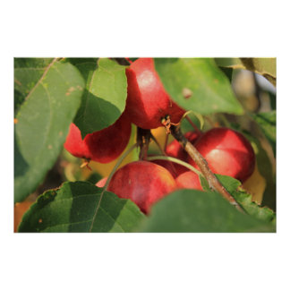 Crabapples Posters