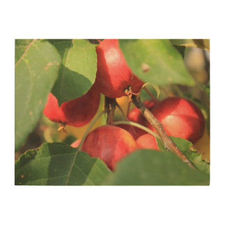 Crabapples Wood Canvases
